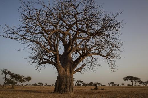 land grabbing Africa