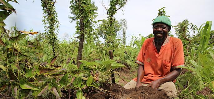 Obiettivi di sviluppo sostenibile: la terra