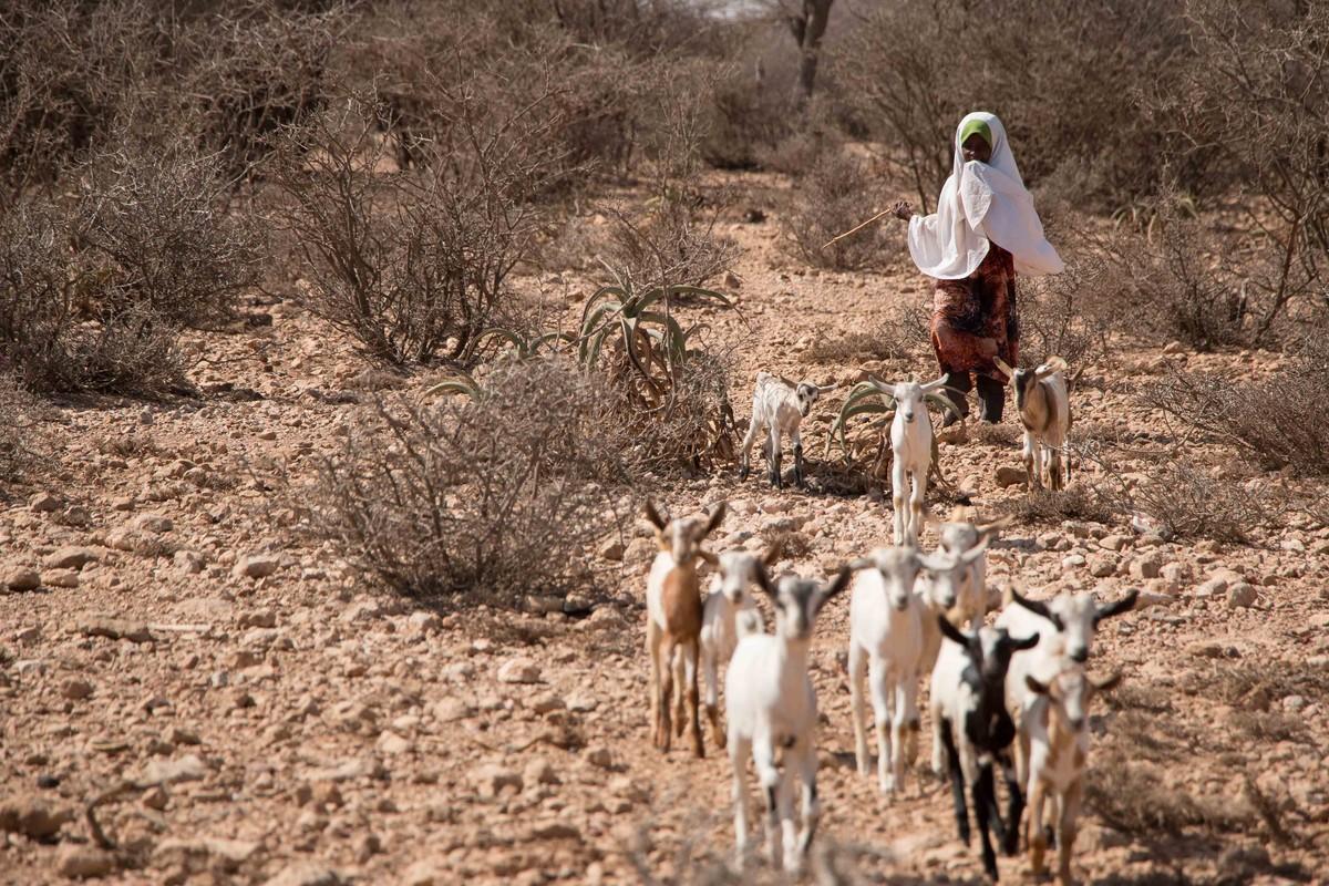 Emergenza Corno d'Africa: siccità e migrazioni